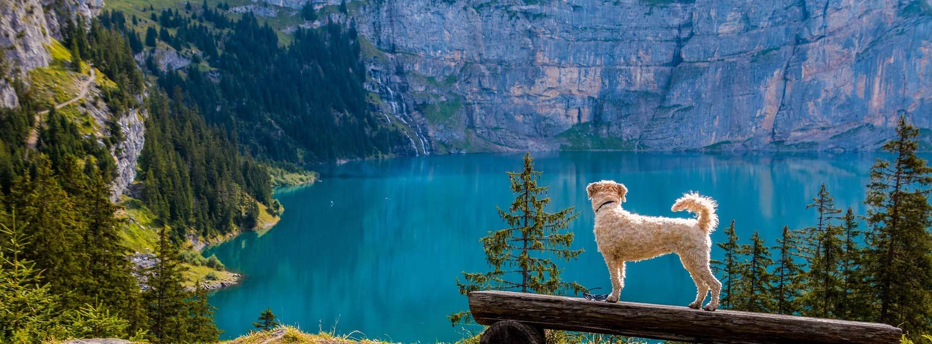 dog at mountain lake